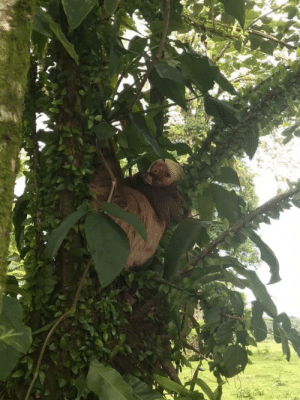 Saw, Costa Rica, and The Road: Saw this guy on the side of the road in Costa Rica