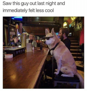 Animals, Dogs, and Memes: Saw this guy out last night and  immediately felt less cool Dog Memes Of The Day 32 Pics – Ep39 #dogs #dogmemes #lovelyanimalsworld - Lovely Animals World