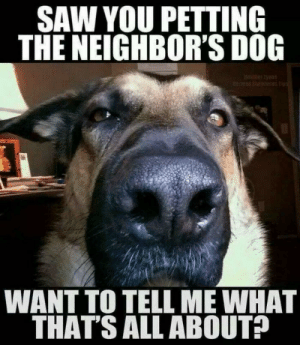 Top 10 hilarious dog memes - Marriage & Family - Home & Family ...: SAW YOU PETTING  THE NEIGHBOR'S DOG  e tyons  esps  WANT TO TELL ME WHAT  THAT'S ALL ABOUT? Top 10 hilarious dog memes - Marriage & Family - Home & Family ...
