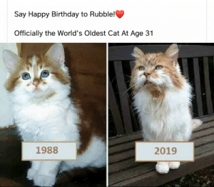 titan-of-the-void: celticpyro:   emeraldspiral:  amber-acrylic: Happy birthday Rubble! 🎈🎈🎈 I can't believe there's a cat alive that's older than me.  Old Boy   This…. this was a moment that made me do a 10-second google search. Yeah but she's dead now so she's no longer the world's oldest cat. Oldest living cat was implied.: Say Happy Birthday to Rubble!  Officially the World's Oldest Cat At Age 31  1988  2019 titan-of-the-void: celticpyro:   emeraldspiral:  amber-acrylic: Happy birthday Rubble! 🎈🎈🎈 I can't believe there's a cat alive that's older than me.  Old Boy   This…. this was a moment that made me do a 10-second google search. Yeah but she's dead now so she's no longer the world's oldest cat. Oldest living cat was implied.
