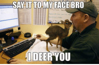 advice-animal:  Come at me bro, preferably with some carrots or grass.: SAY LT TO MY FACE BRO  DEER YOU advice-animal:  Come at me bro, preferably with some carrots or grass.