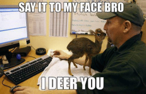 Deer, Grass, and Face: SAY LT TO MY FACE BRO  DEER YOU Come at me bro, preferably with some carrots or grass.