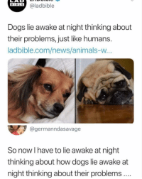 Animals, Dogs, and Memes: SBLE @ladbible  BIBL E  Dogs lie awake at night thinking about  their problems, just like humans.  ladbible.com/news/animals-w  @germanndasavage  So now I have to lie awake at night  thinking about how dogs lie awake at  night thinking about their problems.. Wow