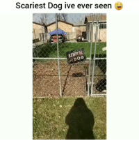 Funny, Lmao, and Watch Out: Scariest Dog ive ever seen e  EWRE  DOG Watch out lmao