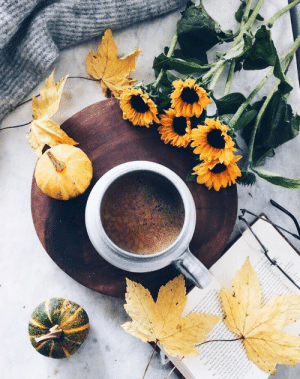 scarletravenswood: In the mornings I like to add a little cinnamon to my coffee and while I'm doing so I visualize a day of productivity and happiness. Are there any little daily morning spells or rituals you like to do? ☕️🍂 This pic from @birgittetheresa : scarletravenswood: In the mornings I like to add a little cinnamon to my coffee and while I'm doing so I visualize a day of productivity and happiness. Are there any little daily morning spells or rituals you like to do? ☕️🍂 This pic from @birgittetheresa