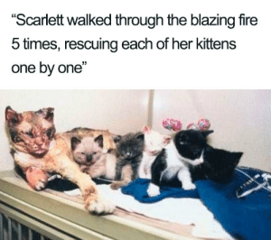 "A true hero in our midst via /r/wholesomememes https://ift.tt/2Y8CdVq: ""Scarlett walked through the blazing fire  5 times, rescuing each of her kittens  one by one"" A true hero in our midst via /r/wholesomememes https://ift.tt/2Y8CdVq"