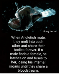 Bodies , Memes, and Forever: Scary horror  When Anglefish mate,  they melt into each  other and share their  bodies forever. If a  male finds a female, he  latches on and fuses to  her, losing his internal  organs until they share a  bloodstream. I wish I had a relation this strong