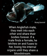 Bodies , Goals, and Memes: Scary horror  When Anglefish mate,  they melt into each  other and share their  bodies forever. If a  male finds a female, h  latches on and fuses to  her, losing his internal  organs until they share a  bloodstream. freaking goals 😩😩👅💦💯💯💯👌🏾