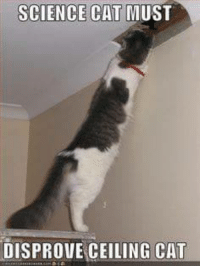 ceiling cat is watching you: SCIENCE CAT  MUST  DISPROVE CEILING CAT