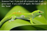 "Be Like, Dude, and Memes: Science Fact: If you pull off a lizard's tail, it will  grow back. If you pull if off again, the lizard will be  like ""dude"". <p>Dude, not again via /r/memes <a href=""https://ift.tt/2urR92F"">https://ift.tt/2urR92F</a></p>"