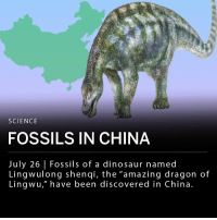 "Dinosaur, Memes, and China: SCIENCE  FOSSILS IN CHINA  July 26 | Fossils of a dinosaur named  Lingwulong shenqi, the ""amazing dragon of  Lingwu, have been discovered in China. Scientists are rethinking the evolution of dinosaurs after paleontologists discovered new fossils in China. The new species of diplodocid known as Lingwulong shenqi, the ""amazing dragon of Lingwu"" was found outside of Lingwu, China. Diplodocids are sauropods, a subgroup of large, long-necked herbivores. This discovery suggests that sauropods lived earlier than scientists previously believed. ___ Fossils of another early sauropod, Ingentia prima, were discovered earlier this month in Argentina."