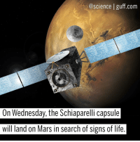 How exciting! The ExoMars program was created by the ESA as a way to study the Martian environment and see if there was ever life on the Red Planet. The Schiaparelli landing capsule is due to touch down on Mars tomorrow (October 19), using its shiny gold aeroshell to protect it from the heat and dust particles and a parachute to slow it down for impact. The goal of this mission? To look for signs of life on Mars, figure out variations in the geochemical environment and study the different types of gas on the planet and where they come from. Photo cred: ESA Science Space Mars ESA SpaceTravel RedPlanet ExoMars Sciaparelli BestOf: @science guff.com  On Wednesday, the Schiaparelli capsule  will land on Mars in search of signs of life How exciting! The ExoMars program was created by the ESA as a way to study the Martian environment and see if there was ever life on the Red Planet. The Schiaparelli landing capsule is due to touch down on Mars tomorrow (October 19), using its shiny gold aeroshell to protect it from the heat and dust particles and a parachute to slow it down for impact. The goal of this mission? To look for signs of life on Mars, figure out variations in the geochemical environment and study the different types of gas on the planet and where they come from. Photo cred: ESA Science Space Mars ESA SpaceTravel RedPlanet ExoMars Sciaparelli BestOf