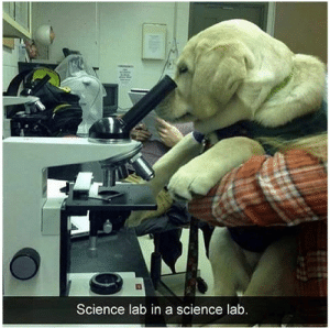 Animals, Funny, and Memes: Science lab in a science lab.  je0 42 Funny Dog Memes That'll Make Your Day! - Lovely Animals World