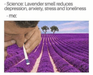 Funny Memes Hilarious Memes So True: - Science: Lavender smell reduces  depression, anxiety, stress and loneliness  -me: Funny Memes Hilarious Memes So True