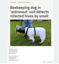 Smell, Science, and Sting: Science/Natural Sciences  Beekeeping dog in  'astronaut' suit detects  infected hives by smell  lebocajb 4h  my naem is dog  haev special trick  i sniff buzz boyes  tell if dey sicc  my hoom make me  protecctiv soot  so angreyflies  cant sting my snoot  *Reply會413 That poem though 😂😂
