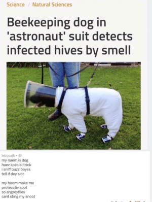 sniffy doge via /r/memes https://ift.tt/2ZOkZIZ: Science/Natural Sciences  Beekeeping dog in  astronaut' suit detects  infected hives by smell  lebocajb 4h  my naem is dog  haev special trick  i sniff buzz boyes  tell if dey sicc  my hoom make me  protecctiv soot  so angreyflies  cant sting my snoot sniffy doge via /r/memes https://ift.tt/2ZOkZIZ