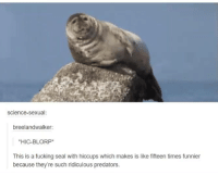 Hop, Hop.: Science-sexual  breelandwalker:  *HIC-BLORP  This is a fucking seal with hiccups which makes is like fifteen times funnier  because they're such ridiculous predators. Hop, Hop.