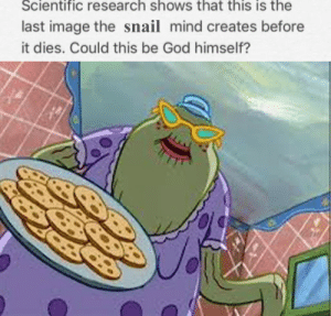 God, Image, and Mind: Scientific research shows that this is the  last image the snail mind creates before  it dies. Could this be God himself? Oh, there you are, Miss Tuffsy. You must be starving!
