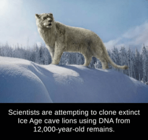 laughoutloud-club:  How could this possibly go wrong?: Scientists are attempting to clone extinct  Ice Age cave lions using DNA from  12,000-year-old remains. laughoutloud-club:  How could this possibly go wrong?