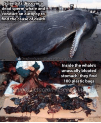 Think about this when you're about to pollute the ocean... http://t.co/igVgahfEGL: Scientists dis covera  dead sperm whale and  conduct an autopsy to  find the cause of death  ccupyEducated  Inside the whale's  unusually bloated  stomach, they find  100 plastic bags  agos Setaceat Resea Think about this when you're about to pollute the ocean... http://t.co/igVgahfEGL