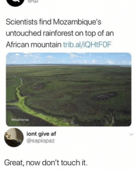 Af, Memes, and Best: Scientists find Mozambique's  untouched rainforest on top of an  African mountain trib.al/iQHtFOF  @BestMemes  iont give af  @sapiopa:z  Great, now don't touch it. I know I say this a lot, but @BestMemes actually has the best memes
