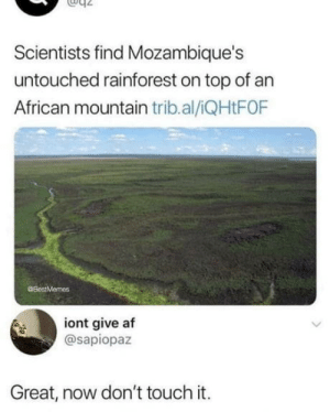 Af, Top, and Touch: Scientists find Mozambique's  untouched rainforest on top of an  African mountain trib.al/iQHtFOF  @BostMemes  iont give af  @sapiopaz  Great, now don't touch it. Please