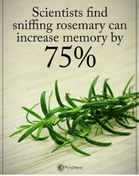 Memes, 🤖, and Can: Scientists find  sniffing rosemary can  increase memory by  75% Scientist find sniffing rosemary can increase memory by 75% powerofpositivity