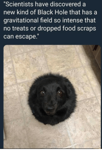 "Food, Black, and Humans of Tumblr: ""Scientists have discovered a  new kind of Black Hole that has a  gravitational field so intense that  no treats or dropped food scraps  can escape."