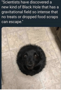 "Food, Black, and Wholesome: ""Scientists have discovered a  new kind of Black Hole that has  gravitational field so intense that  no treats or dropped food scraps  can escape. Hope this wholesome doggo make your day guys."