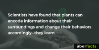 Plants learn! https://www.ncbi.nlm.nih.gov/pmc/articles/PMC2634023/: Scientists have found that plants can  encode information about their  surroundings and change their behaviors  accordingly they learn.  uber  facts Plants learn! https://www.ncbi.nlm.nih.gov/pmc/articles/PMC2634023/