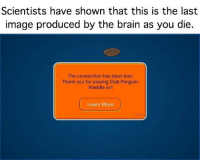 """Club, Memes, and Lost: Scientists have shown that this is the last  image produced by the brain as you die  The connection has been lost.  Thank you for playing Club Penguin.  Waddle on!  Learn More  1000S <p>Rip, club disband forever via /r/memes <a href=""""http://ift.tt/2no3qxc"""">http://ift.tt/2no3qxc</a></p>"""