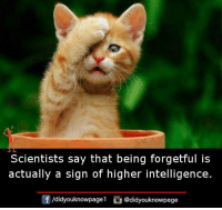 Memes, 🤖, and Intelligence: Scientists say that being forgetful is  actually a sign of higher intelligence.  /d.dyouknowpagel。@didyouknowpage