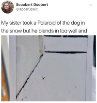 Instagram, Meme, and Snow: Scoobert Doobert  @apotrOpaic  My sister took a Polaroid of the dog in  the snow but he blends in too well and @epicfunnypage voted the funniest meme page on instagram 😂