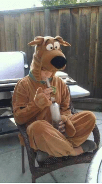 """Cute, Lmfao, and Bong: Scooby Harry<< repin if you think """"scoot Harry"""" is still cute :)<<<I don't think that's Harry but how is everyone ignoring the bong lmfao"""