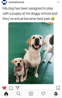 School, Best, and Puppy: Scottishsocial  Ma dog has been assigned to play  with a puppy at his doggy school and  they've actual became best pals <p>The cutest ever!</p>