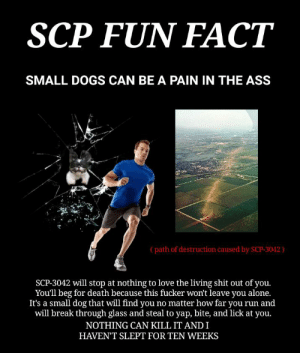 Being Alone, Ass, and Dogs: SCP FUN FACT  SMALL DOGS CAN BE A PAIN IN THE ASS  (path of destruction caused by SCP-3042)  SCP-3042 will stop at nothing to love the living shit out of you.  You'll beg for death because this fucker won't leave you alone.  It's a small dog that will find you no matter how far you run and  will break through glass and steal to yap, bite, and lick at you.  NOTHING CAN KILL IT AND I  HAVENT SLEPT FOR TEN WEEKS Someone, please end my suffering