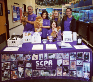This is how we roll! Happenin' now at Petsmart, Tustin marketplace, Tustin California. We will be here until 4:00 PM: SCPR  Southern Californio  Pomeranian Rescue This is how we roll! Happenin' now at Petsmart, Tustin marketplace, Tustin California. We will be here until 4:00 PM