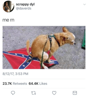 Ass, Dumb, and Tumblr: scrappy dyl  @daverds  me rn  8/12/17, 3:53 PM  23.7K Retweets 64.4K Likes c-bassmeow: ^ bish shut the fuck up before I stomp on your dumb ass. I'll beat your ass while the confederate and American flags are burning in the background to the sound of the national anthem