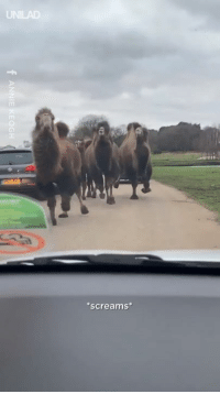 "Dank, Family, and Video: screams ""Please enjoy his video of me and my family thinking we are going to be killed by camels 👌🐫"""