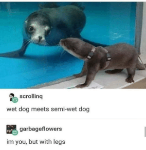 Saw this and thought it should be here: scrolling  wet dog meets semi-wet dog  garbageflowers  im you, but with legs Saw this and thought it should be here