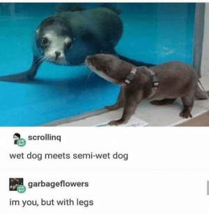 water puppers: scrolling  wet dog meets semi-wet dog  garbageflowers  im you, but with legs water puppers