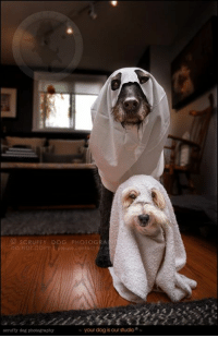 Memes, Asos, and Best: SCRUFFY DOG PHOTOG  DO NO GOPY aso contact  f  your dog is our studio  scruffy dog photography ...the best two ghouls that ever were.