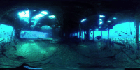 Crazy, Dank, and Videos: Scuba diving in a shark tank? These guys are crazy! 😱  By 360 Videos