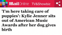 Funny, Kylie Jenner, and Puppies: SE mailOnline TV&Showbiz .e  I'm here talking care of  puppies Kylie Jenner sits  out of American Music  Awards after her dog gives  birth Me as a celebrity