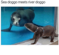 Memes, Science, and 🤖: Sea doggo meets river doggo This is beyond science