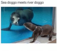 Funny, Memes, and Science: Sea doggo meets river doggo This is beyond science (@funny)