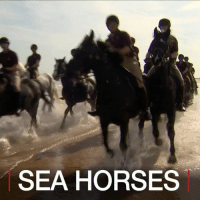 Animals, England, and Horses: SEA HORSES 22 JUL: What are 133 horses doing on a beach in eastern England? It's where elite cavalry regiments go on holiday. Watch cavalrymen and their mounts from The Life Guards and The Blues and Royals - the British Army's most senior regiments – enjoy a little rest and recreation on the Norfolk coast. For more on horses and the military: bbc.in-rescuehorses Horse Horses Animals Military Cavalry HouseholdCavalry BritishArmy TheBritishArmy TheBluesAndRoyals TheLifeGuards BBCShorts BBCNews @BBCNews