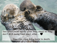 Well that's adorable. ~pizza: Sea otters hold hands when they sleep so they  don't drift away from each other.  they also rape baby seals to death. Well that's adorable. ~pizza