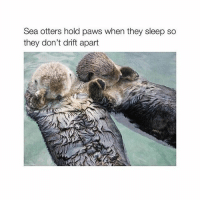 im so tiredddd: Sea otters hold paws when they sleep so  they don't drift apart im so tiredddd