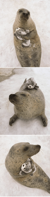 Plush, Toy, and Hugs: Sea Pupper hugs toy version of himself.
